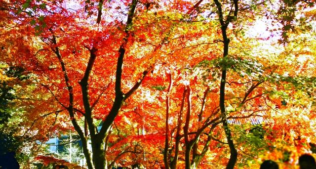 高尾山紅葉