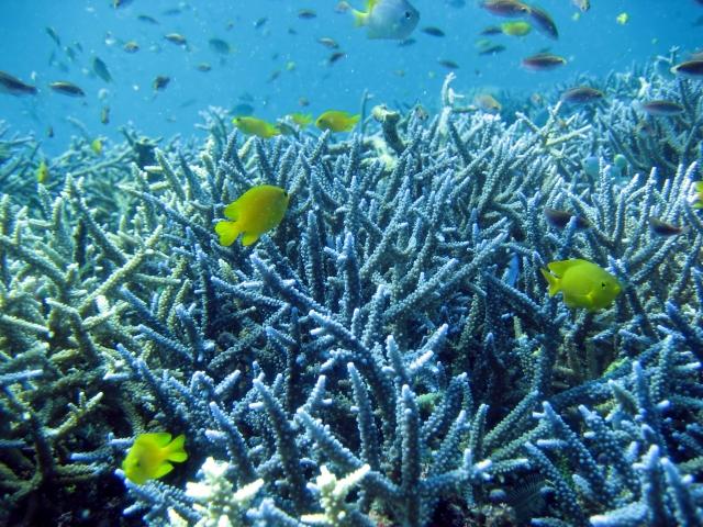 7月の沖縄の島のサンゴ礁