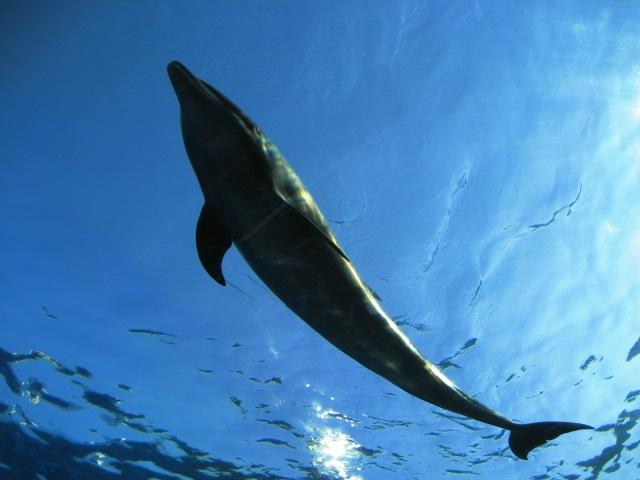 アクアマリンふくしまのイルカ