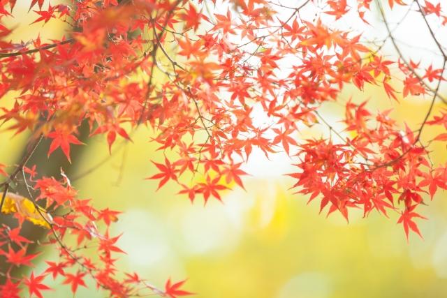 九州地方の紅葉