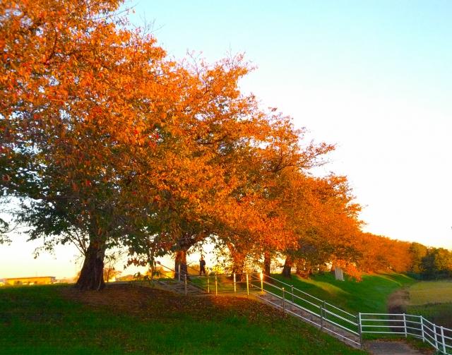 北海道の紅葉公園
