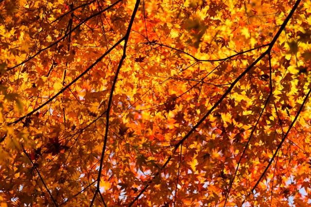 秋の紅葉の時期!猪苗代