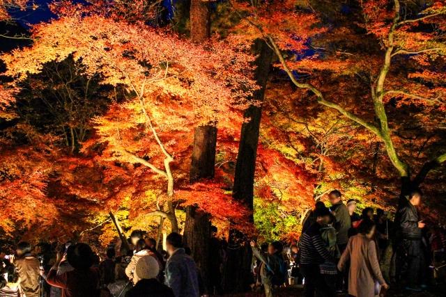 秋の紅葉の時期ライトアップ