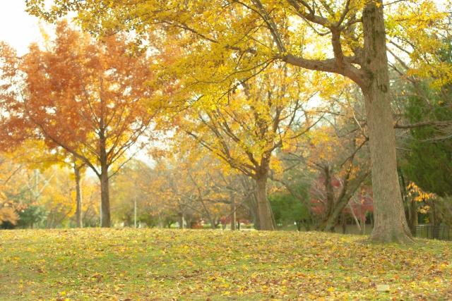 秋の紅葉の時期帯広