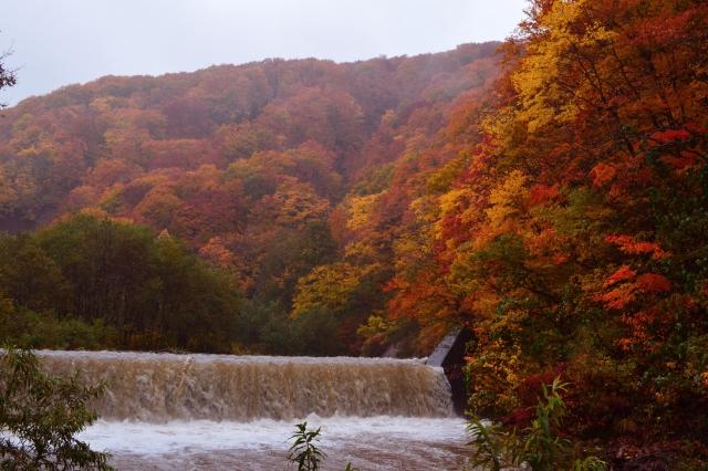 白神山地の紅葉