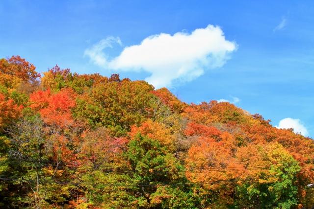 秋の紅葉の時期!
