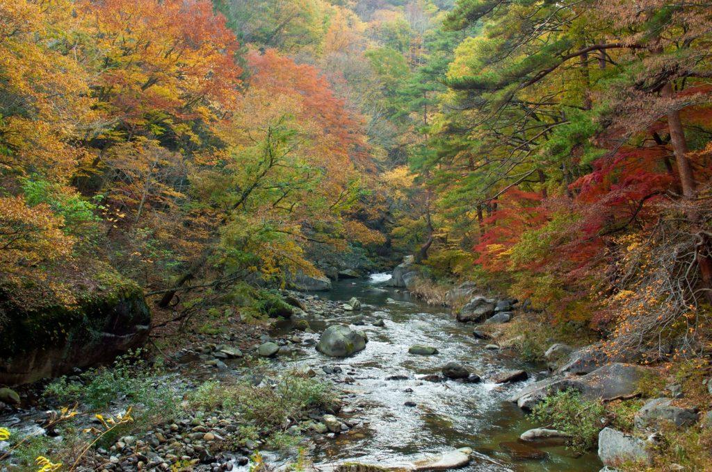 秋の紅葉の時7