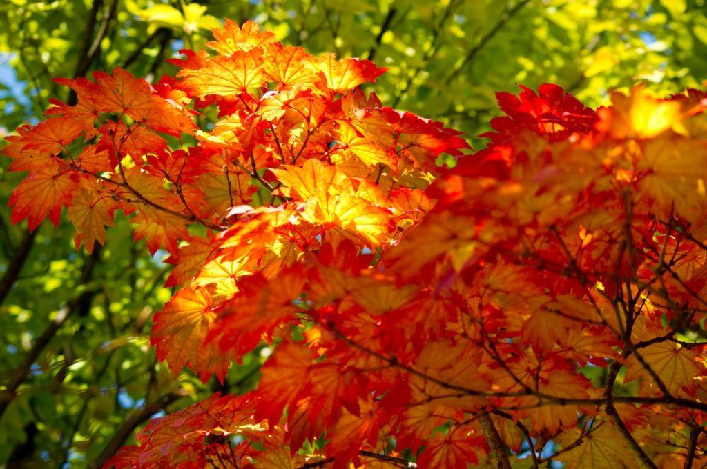 秋の紅葉の時8
