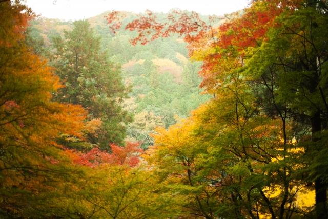 秋の紅葉の時期粟島