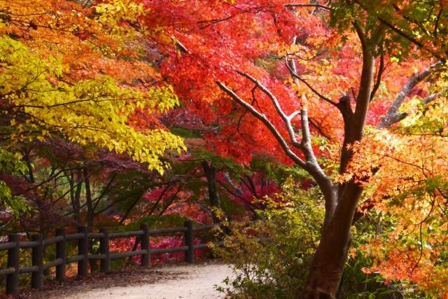 秋の紅葉の時期函館