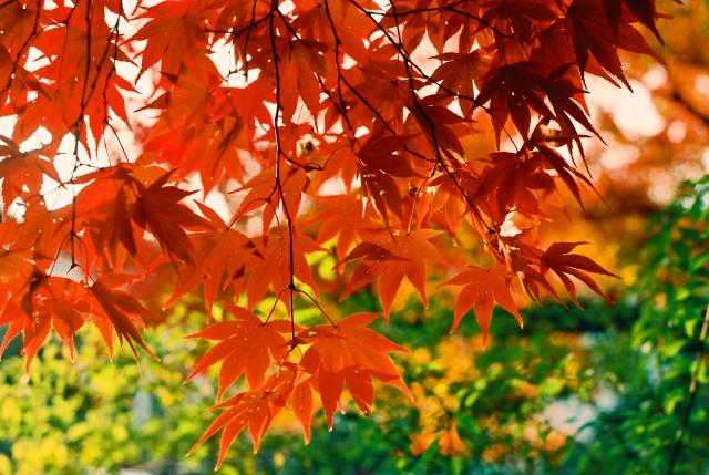 秋の紅葉の時期苫小牧