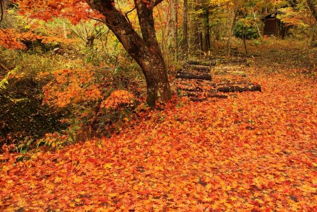 秋の紅葉の時期!会津の紅葉