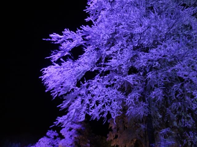 2月蔵王の樹氷