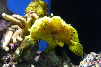 深海魚水族館